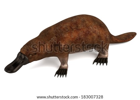 realistic 3d render of platypus - stock photo