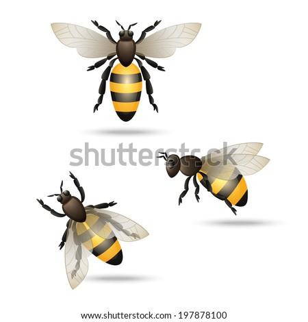 Realistic flying honey bees set isolated on white background  illustration - stock photo