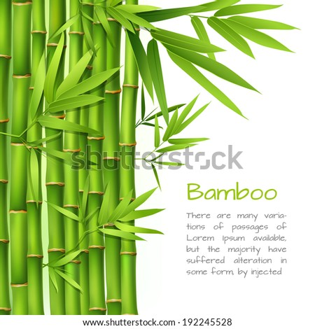 Realistic green bamboo plant grass tree oriental japanese background  illustration