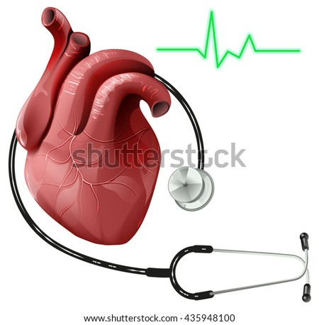 Realistic human heart and stethoscope. Isolated on white illustration