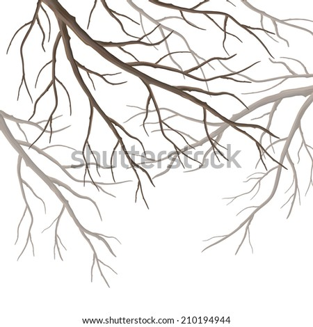 Realistic tree branches silhouette isolated on white background - stock photo