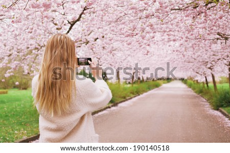 Rear view of a young woman using her mobile phone to capture images of the path and cherry blossoms tree at park. Female taking pictures with her smart phone at spring blossom garden. - stock photo