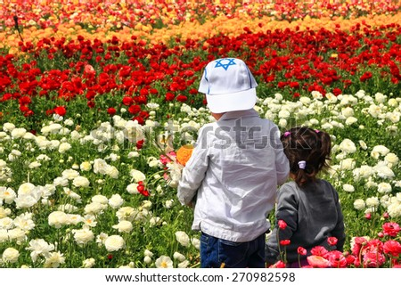 Rear view of an israeli children picking the blossoming flowers of a garden buttercups in the magnificent garden.Spring in Israel  - stock photo