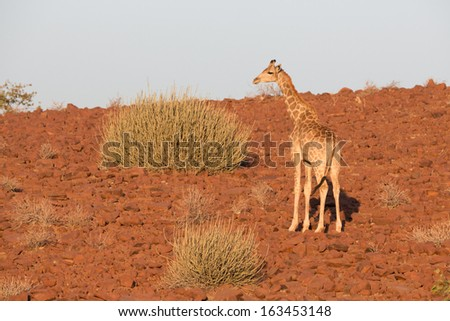 Rear view of giraffe over stone background - stock photo