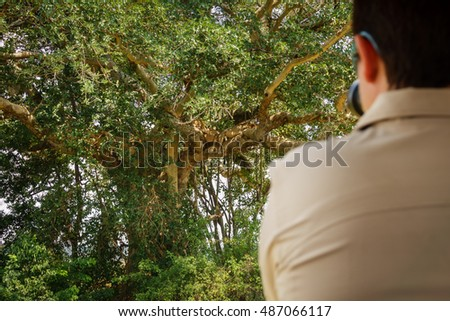 Rear view of tourist observing the view of several Lions on a tree