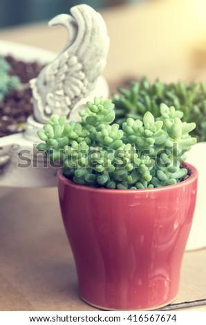 Rectangular arrangement of succulents; cactus succulents in a plante - stock photo