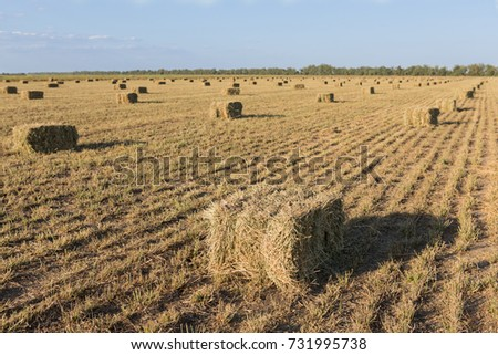 rectangular bales of hay on the field, mown grass packed in bales