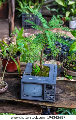 Recycling old televison into tree, Mexico
