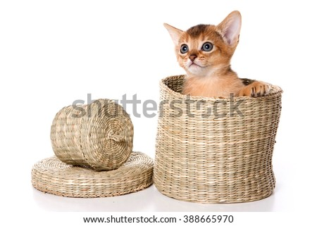 Red Abyssinian kitten in a box (isolated on white)