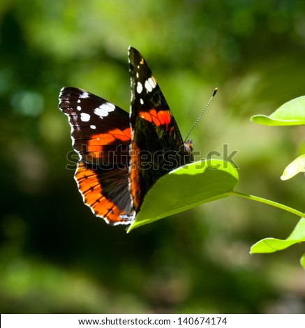 Admiral Butterfly Stock Photos, Images, & Pictures ...