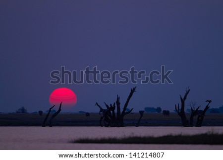 Red African sunset from the Chobe River in Southern Africa - Copyspace