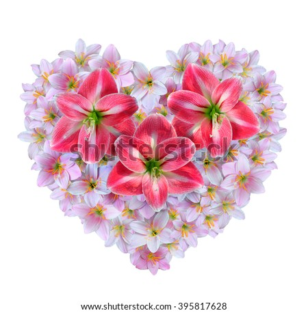 Red Amaryllis flowers over pink Zephyranthes rosea flowers in the shape of a heart for Valentine's Day. - stock photo