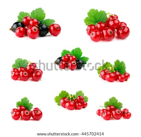Red and black currants with leaf isolated on white. Set.