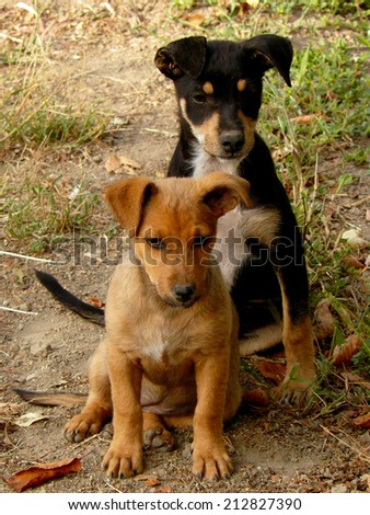 red and black puppies sitting together at the country yard - stock photo
