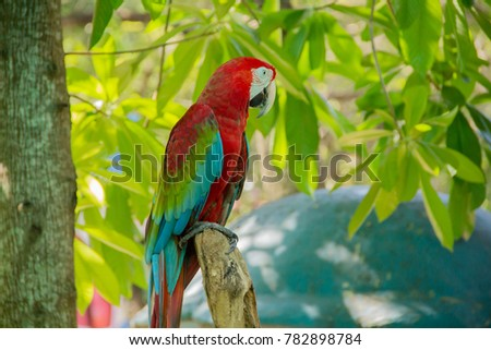 Red and blue parrot