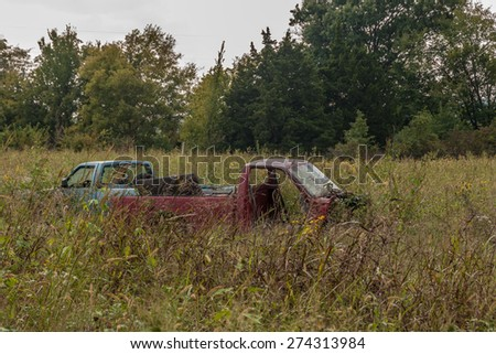 Red and blue pickup trucks almost buried in the tall grasses and weeds surrounding them.  The red one seems to be in the worst condition. - stock photo