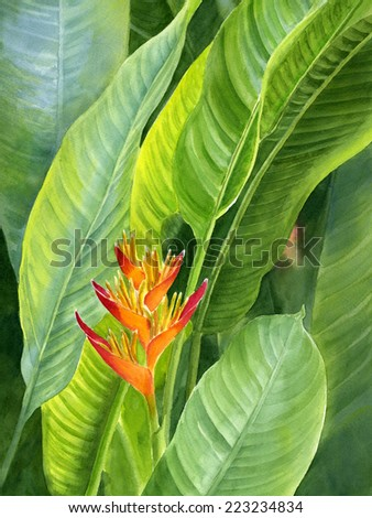 Red and Gold Heliconia with Background Leaves.  Watercolor painting of a red and gold heliconia, tropical flower, from Bird of Paradise family. - stock photo