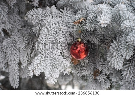Red and golden Christmas ball in real frozen spruce tree - stock photo