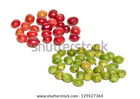 Red and green fresh coffee beans on white - stock photo