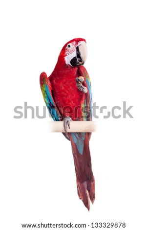 Red-and-green Macaw (Ara chloropterus) isolated over white background