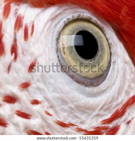 Red-and-green Macaw, close up on eye - stock photo