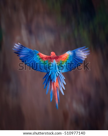 Red and Green macaw with wings spread