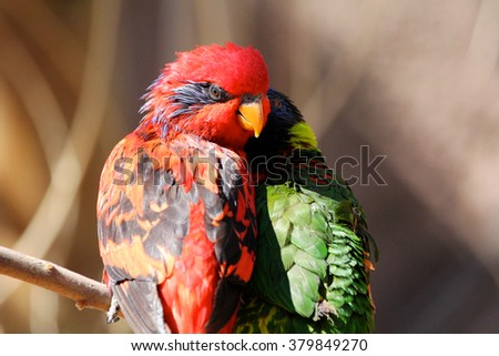Red and Green Parakeet sitting on tree limb - stock photo