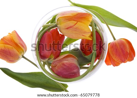 red and orange tulips in glass on white background - stock photo