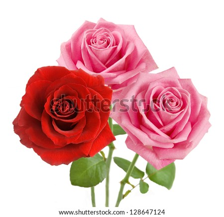 Red and pink roses bunch isolated on white background - stock photo