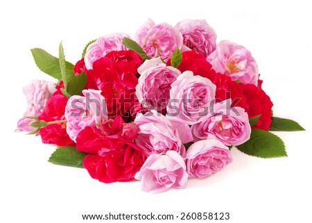 stock-photo-red-and-pink-roses-bunch-isolated-on-white-background-260858123
