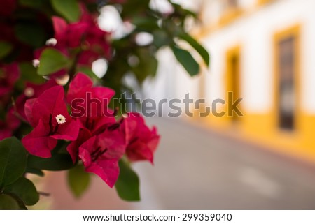 Red and purple flowers in a colorful street in Merida, Spain - stock photo
