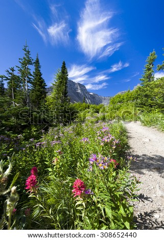 Red and purple wildflowers framing the Ptarmigan Trail in Glacier National Park, MT