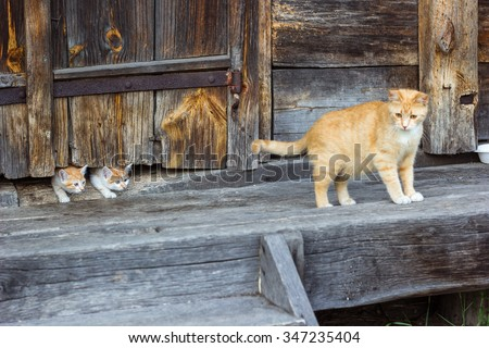 Red and white cat with small kittens against a wooden wall of old wooden hut in a countryside.Cats family. Rustic style. Selective focus. - stock photo