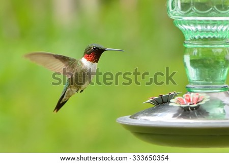 red and white green hummingbird in flight, side view, close to a drinking trough - stock photo