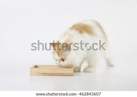 red and white persian cat with wooden box food bowl