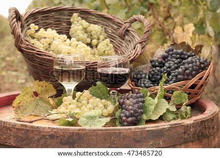 red and white wine autumn season