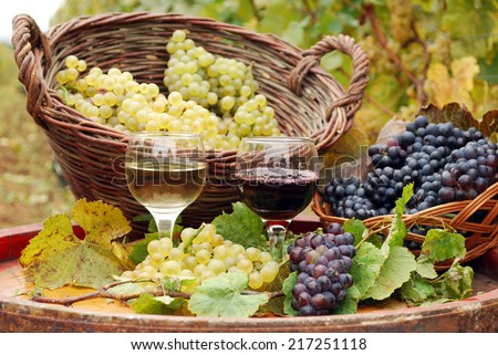 red and white wine with grape autumn season