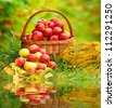 Red and yellow apples in the basket - Autumn at the rural garden. - stock photo