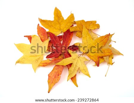 Red and yellow autumn leaves on white background - stock photo