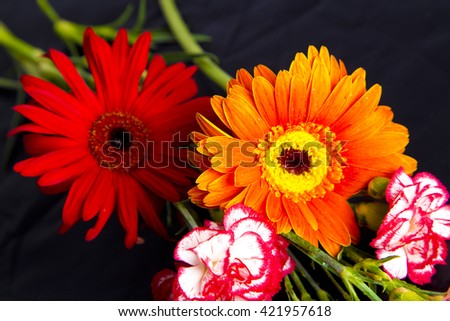 red and yellow gerbera flowers in studio , black background , close up , amazing flower  nature,  nature , orange  petals , white and red carnation