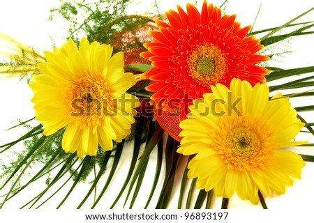 Red and yellow gerbera on white background
