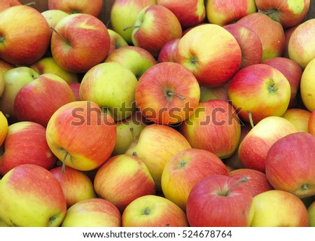 Red and yellow organic apples background harvest