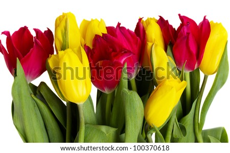 red and yellow tulips border isolated on white background - stock photo