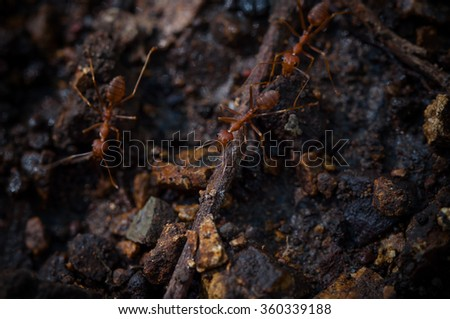 red ant at work on ground in forest with blur background  - stock photo