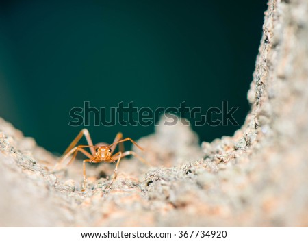Red ant on the tree by close-up on ant head only - stock photo