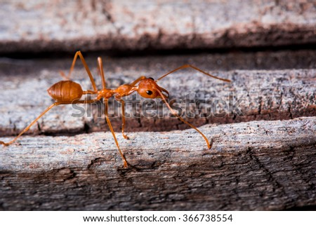 red ant on wooden - stock photo