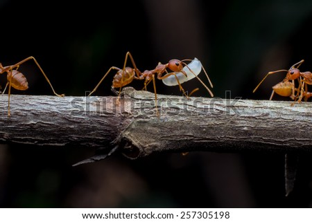 red ant team work helped build its nest. - stock photo