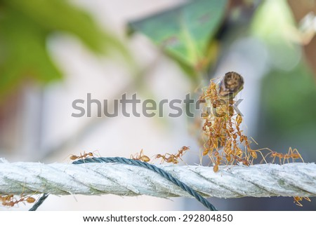 red ant teamwork in green nature or in the garden - stock photo