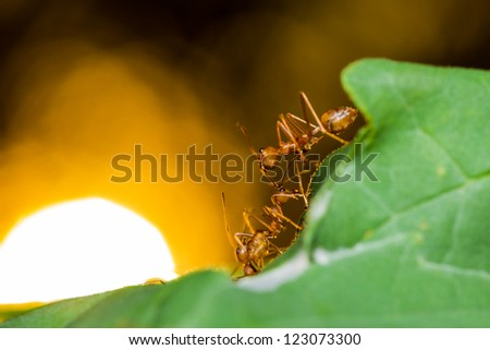 Red ants on green leaf and sun background - stock photo