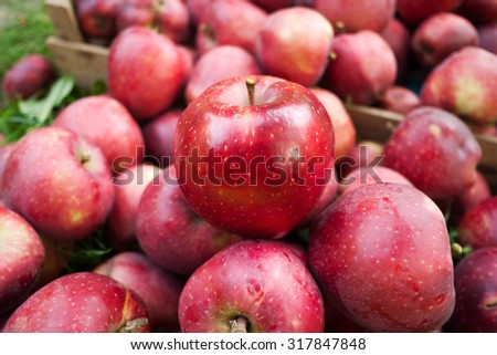 red apple,autumn harvest apples,apples to apples,autumn season,fresh apples,harvest fruit,apples from the garden